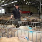 Le marché au cadran des ovins - Notification - lecture des boucles