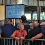 Le marché au cadran des ovins