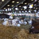 Festival de l'élevage et de la gastronomie